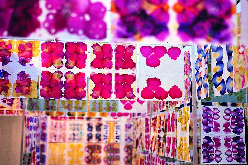 Color Travels through Flowers, Gabriel Orozco
