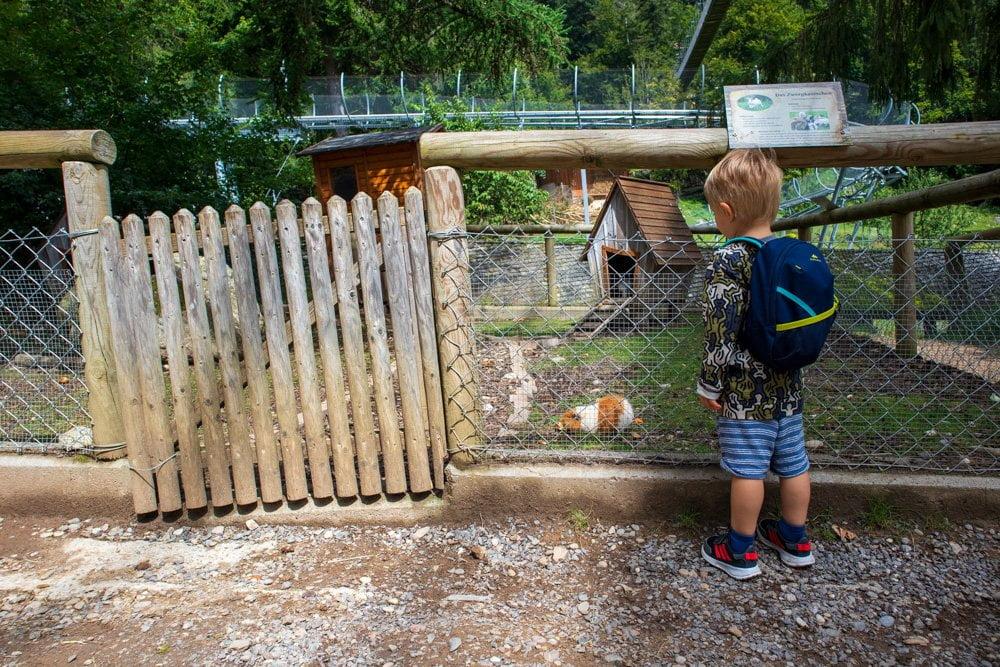 La parte dedicata agli animali domestici dello Steinwasen Park, in Germania