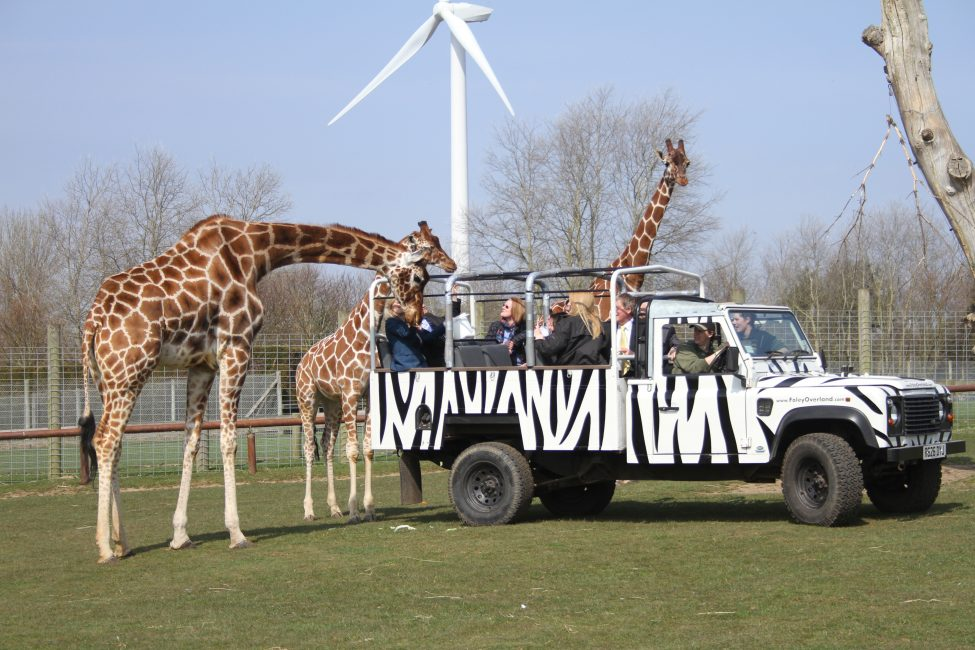 Parco Africa Alive! a Kessingland, in Suffolk