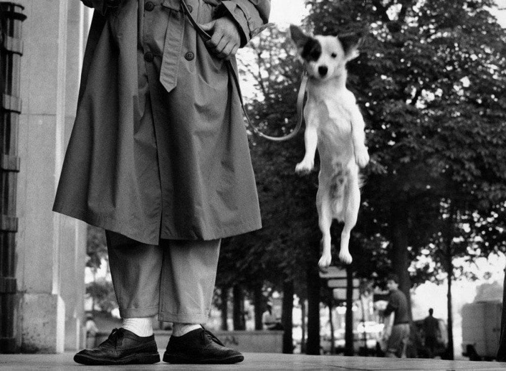 Cane che salta, Francia, Parigi 1989, fotografia di Elliott Erwitt