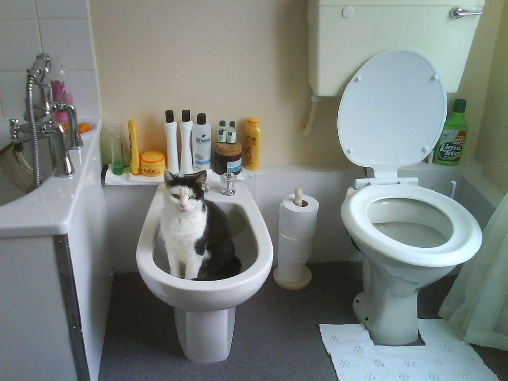Gatti e stranieri non capiscono l'uso del bidet