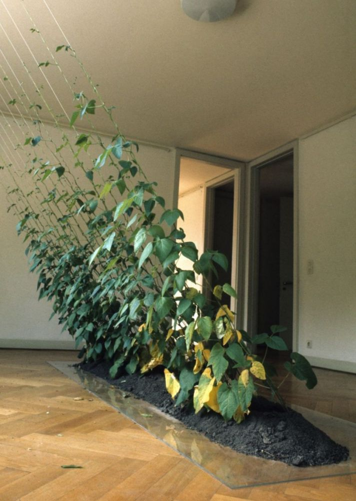 Directed Growth, Hans Haacke