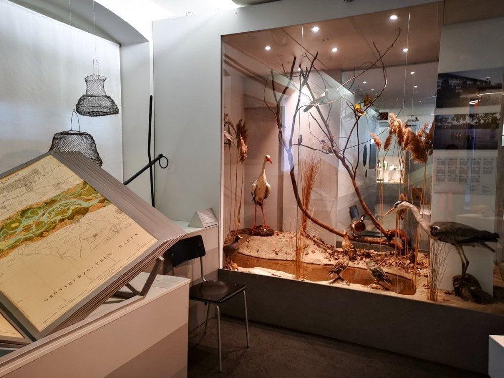 L'ambiente fluviale ricreato in una vetrina al Museo dei Tre Paesi di Lorrach con animali impagliati ed elementi naturali