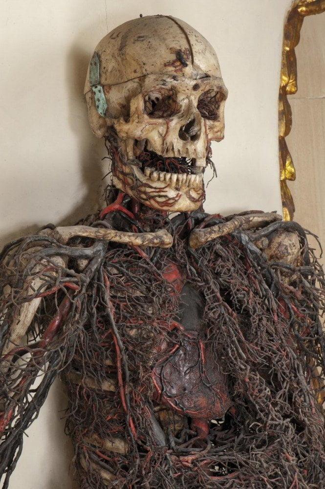 Particolare della macchina anatomica maschile esposta nella cavea della cappella Sansevero a Napoli