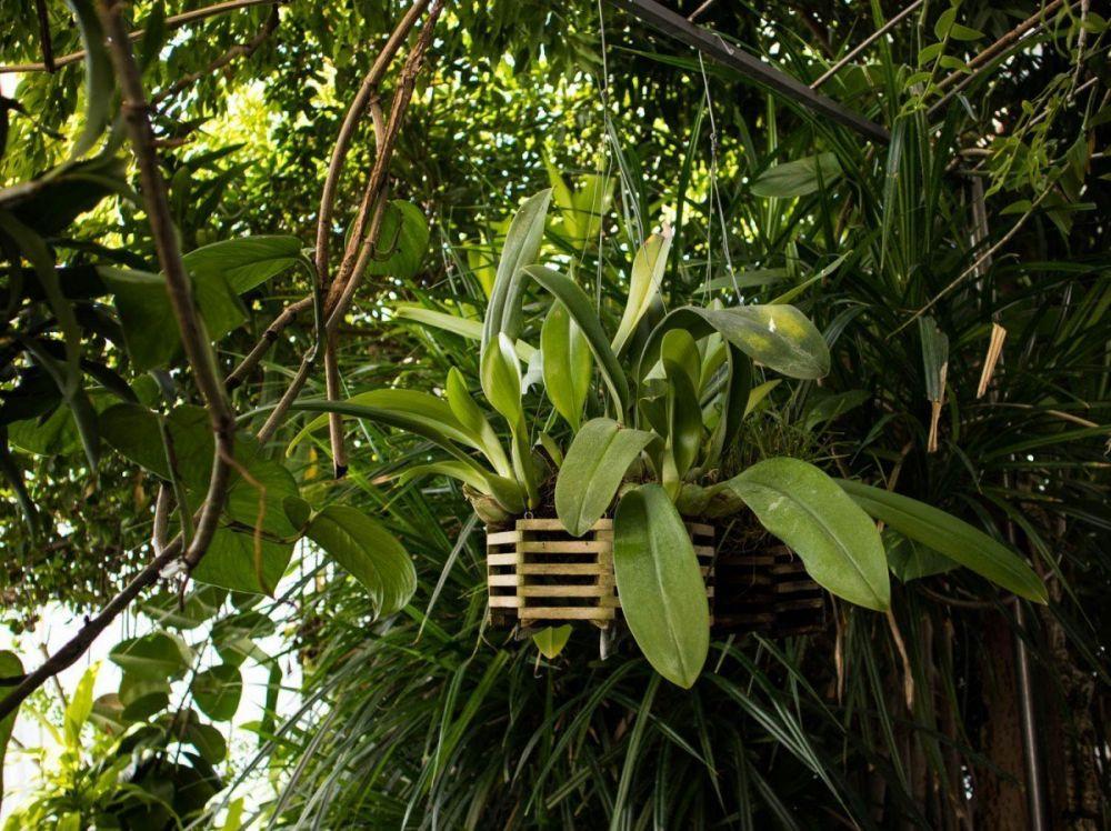 Orchidee alla Biosfera di Genova