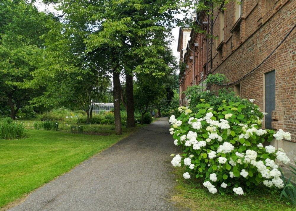 Viale con cespuglio di fiori e alberi nel Giardino dell'Orto Botanico di Torino